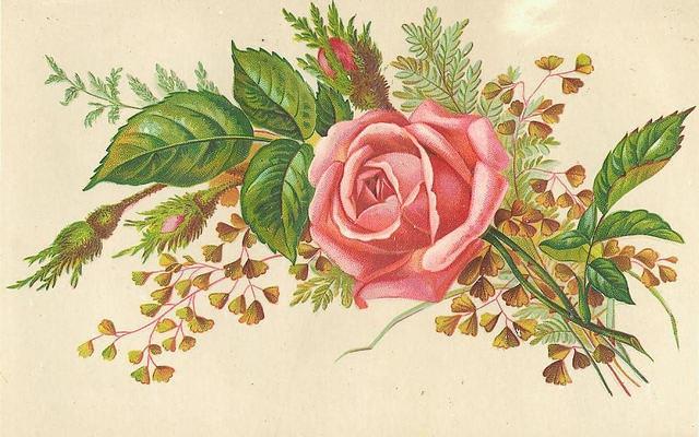 Flowers176 (640x400, 195Kb)