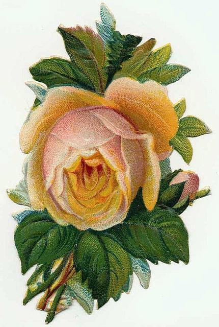 Flowers185 (430x640, 206Kb)