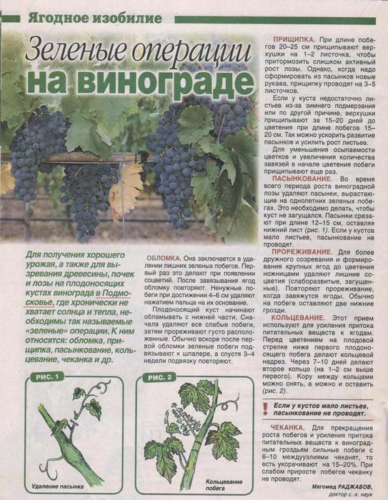 виноград (543x700, 99Kb)