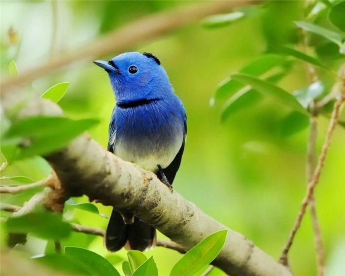 Картинки природы красивые птицы
