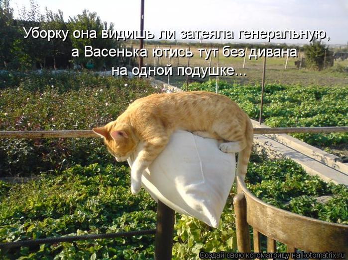 kotomatritsa_Tw (500x524, 478Kb)