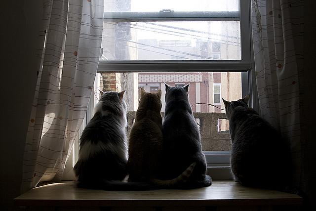О любви...кошачьей