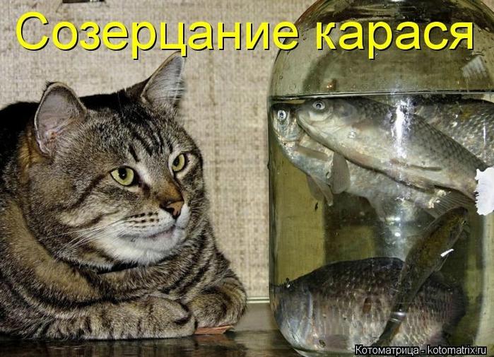 kotomatritsa_Hw (700x505, 294Kb)