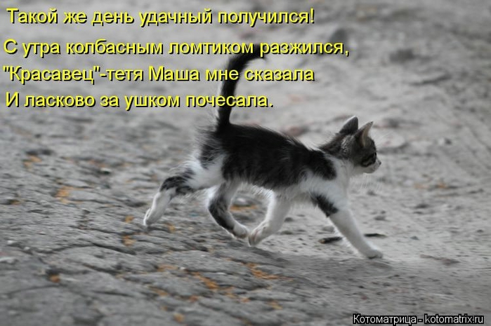 kotomatritsa_ij2 (700x465, 215Kb)