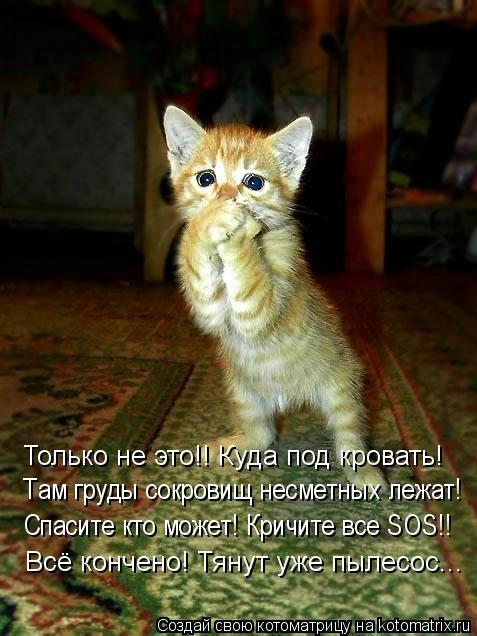 kotomatritsa_UZ (477x636, 149Kb)