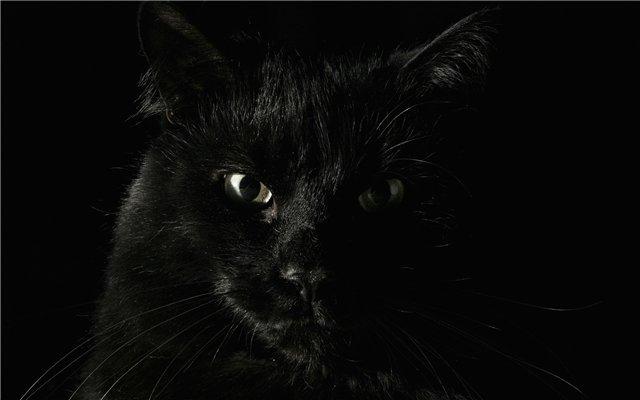черный кот фото (640x400, 68Kb)