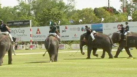 поло на слонах 12