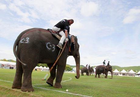 поло на слонах 16