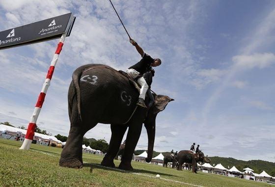 Поло на слонах на королевском турнире в Таиланде
