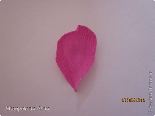 английская роза из конфет мастер-класс (14) (520x390, 43Kb)