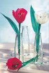 Превью Цветы из креповой (гофрированной) бумаги - журнал (5) (476x700, 219Kb)