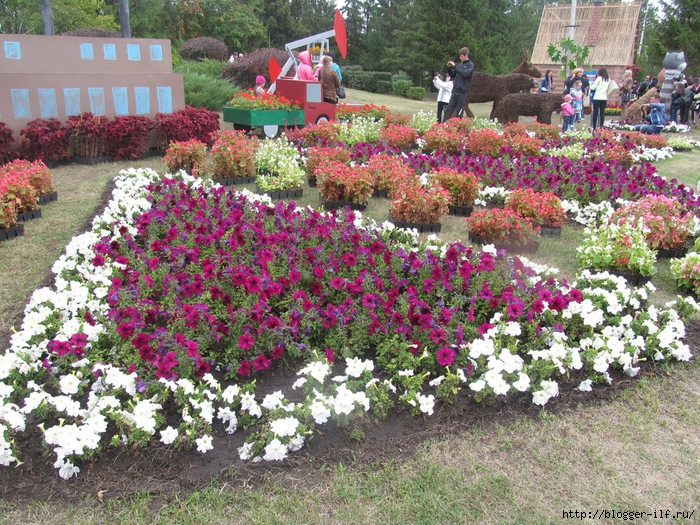 День цветов - Набережные Челны 2013 (700x525, 448Kb)