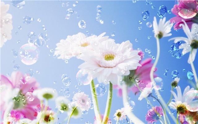 цветы (640x400, 46Kb)