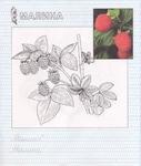 Превью Raskraska-frukti[Puzkarapuz.ru]_page_12 (593x700, 352Kb)