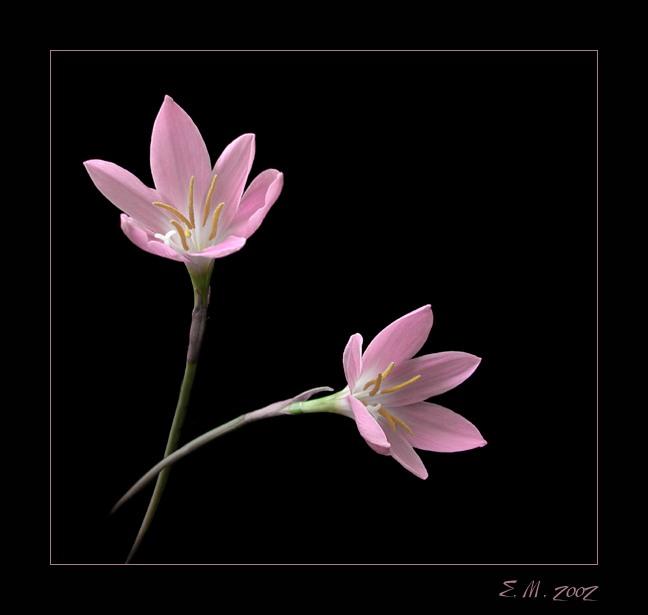 Цветы на черном фоне 078028d647013exl 648x615