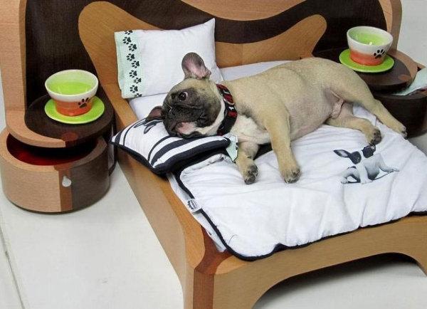 лежанки для собак фото (600x434, 138Kb)