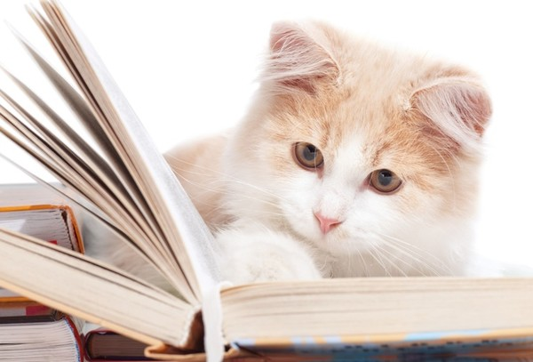 cat-book1 (600x407, 47Kb)