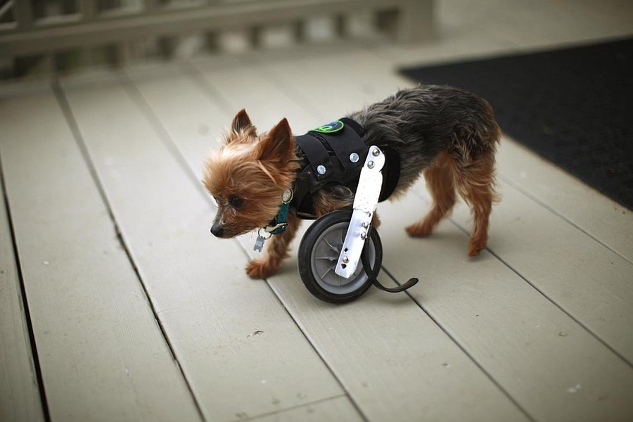 Трах инвалидов без рук и без ног 14 фотография
