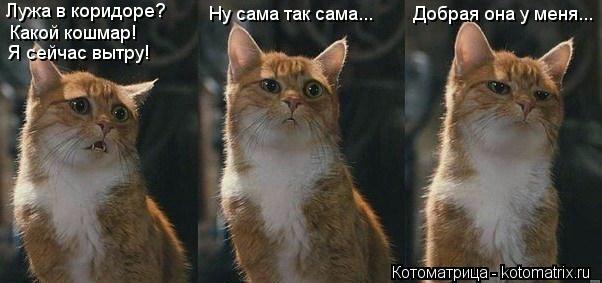 kotomatritsa_BK (602x283, 80Kb)