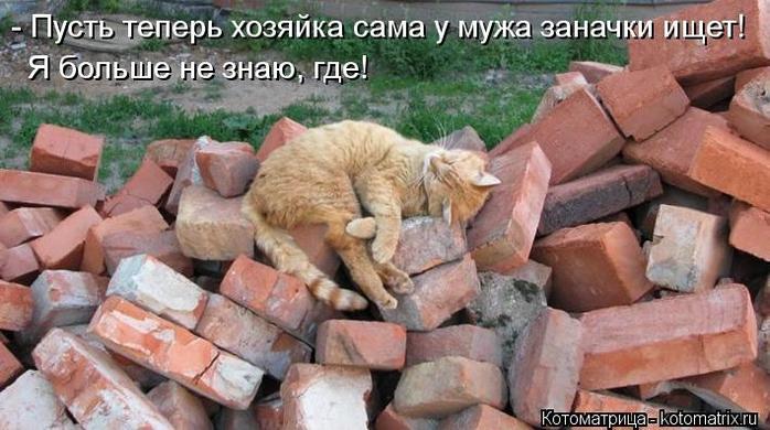 kotomatritsa_2 (700x390, 225Kb)