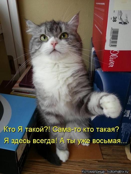 kotomatritsa_4 (524x700, 233Kb)