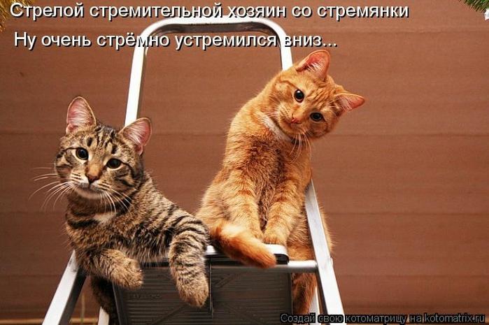 kotomatritsa_8y (700x465, 236Kb)