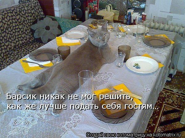 kotomatritsa_Dp (600x450, 178Kb)