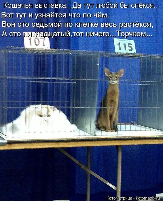 kotomatritsa_TI (566x700, 323Kb)