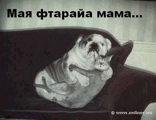 prikolnye_fotki_kotov_s_podpisjami_35_foto_22 (500x386, 28Kb)