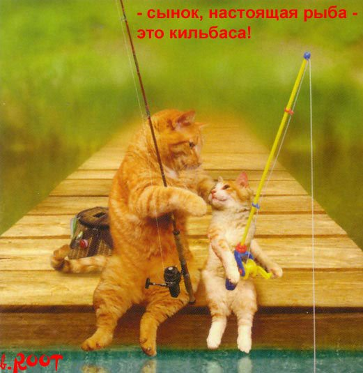 prikolnye_fotki_kotov_s_podpisjami_35_foto_14 (521x535, 52Kb)