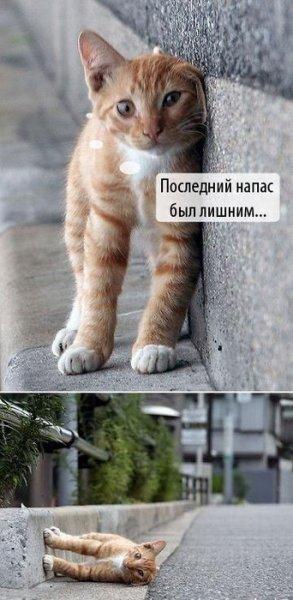 prikolnye_fotki_kotov_s_podpisjami_35_foto_2 (293x600, 43Kb)