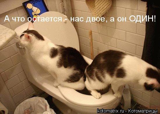 kotomatrix_45 (550x393, 42Kb)