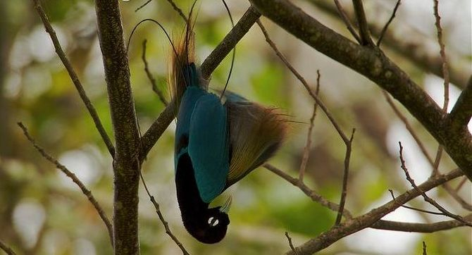 97401850_birdparadise008 (670x362, 194Kb)