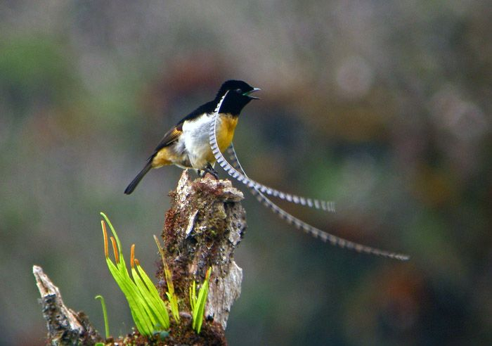 bird-paradise-002 (700x492, 215Kb)