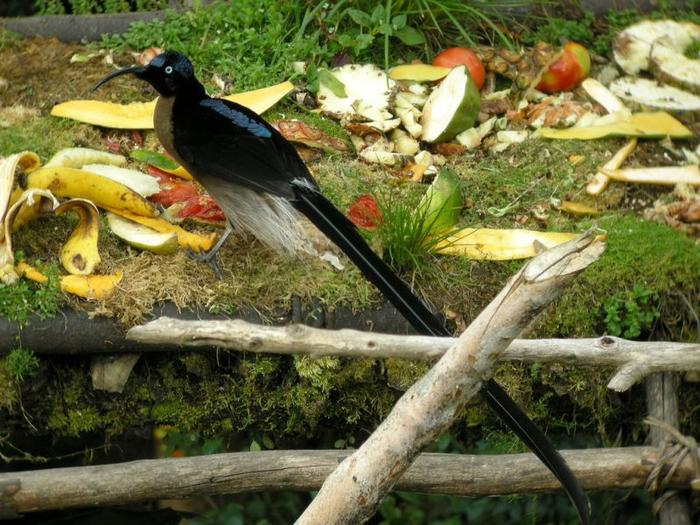 bird-paradise-010 (700x525, 465Kb)