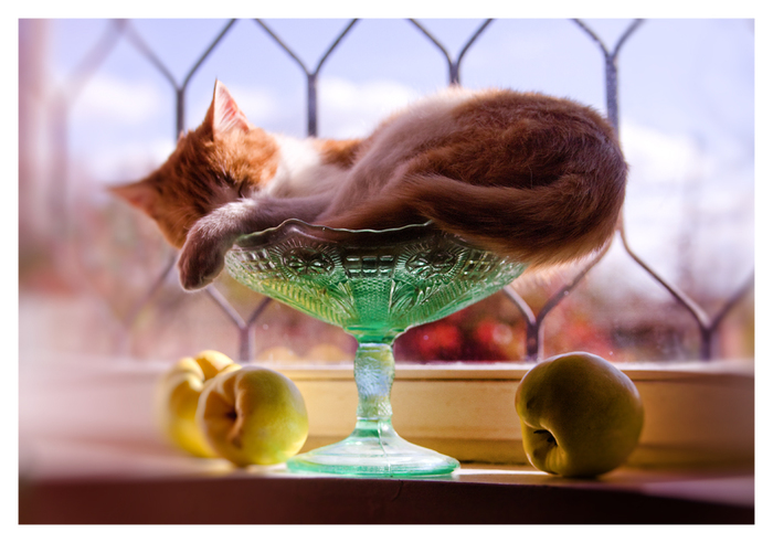 cat_and_apple (700x492, 229Kb)
