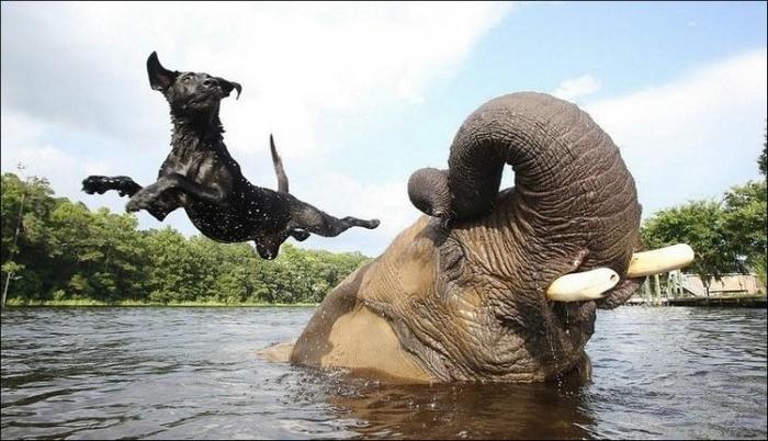 http://img0.liveinternet.ru/images/attach/b/4/105/189/105189814_elephant_and_dog_004.jpg