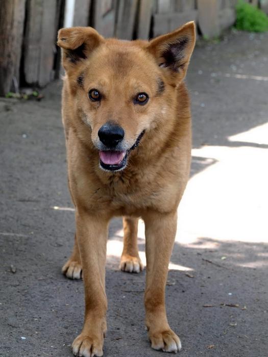 dog2_����� ������ (525x700, 223Kb)