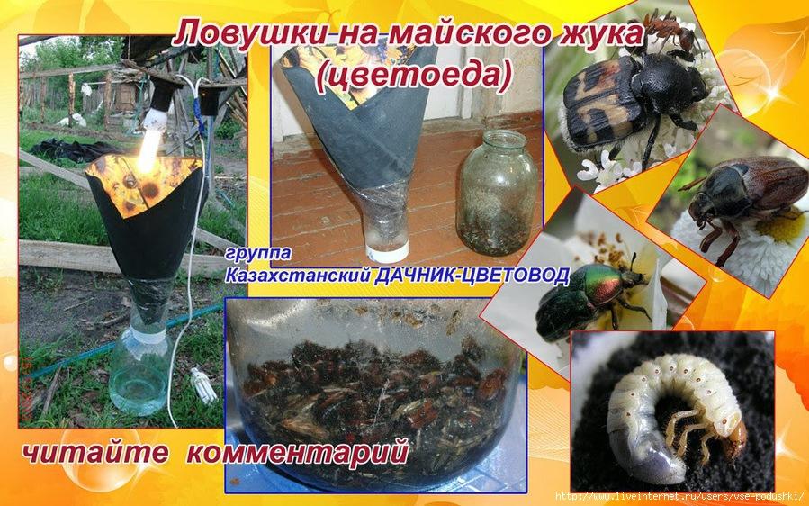 Как в домашних условиях сделать жука из