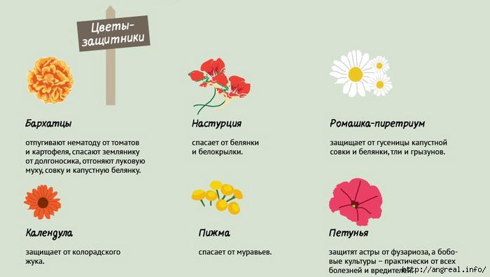 Как сажать растения, чтобы они не вредили друг другу 3
