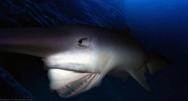 акула-домовой фото 3 (604x323, 92Kb)