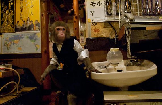 мартышки официанты ресторан кафбуки токио 5 (570x370, 166Kb)