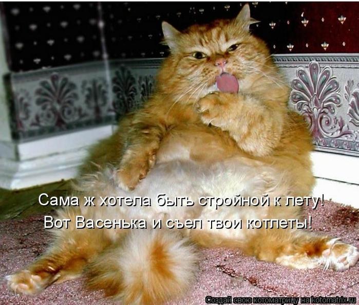 kotomatritsa_4 (700x593, 302Kb)