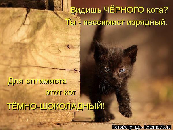 kotomatritsa_cG (600x450, 132Kb)