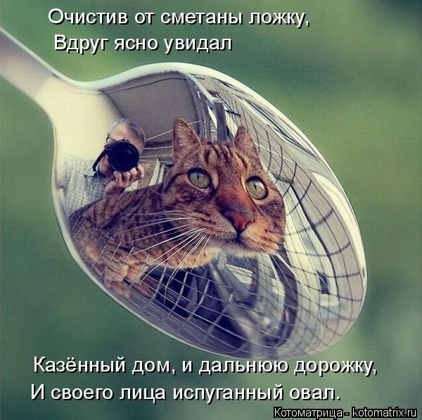 kotomatritsa_i (600x597, 165Kb)