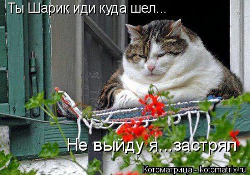 kotomatritsa_-q (491x345, 113Kb)