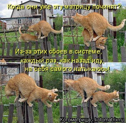 kotomatritsa_uF (402x395, 143Kb)