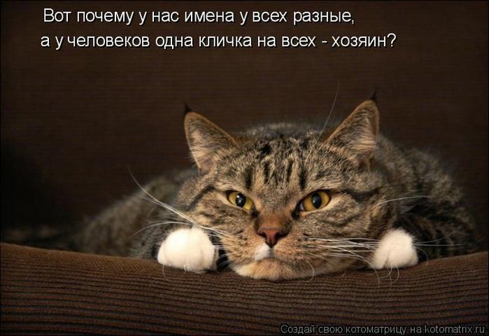 kotomatritsa_w2 (700x480, 211Kb)