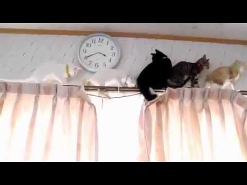 котята верхолазы