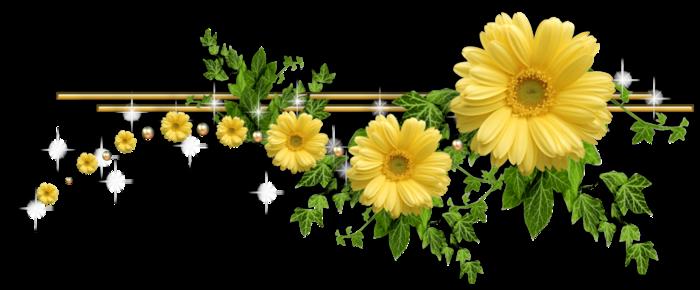 Цветы пионы пнг 9